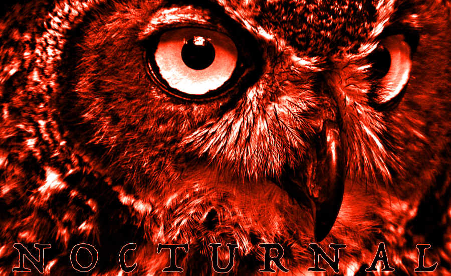 An image of an owl to illustrate the review of Heltah Skeltah's debut album Nocturnal by whatwentrightwith.com